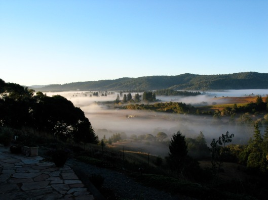 Anderson valley from Lazy Creek Vineyards.jpg